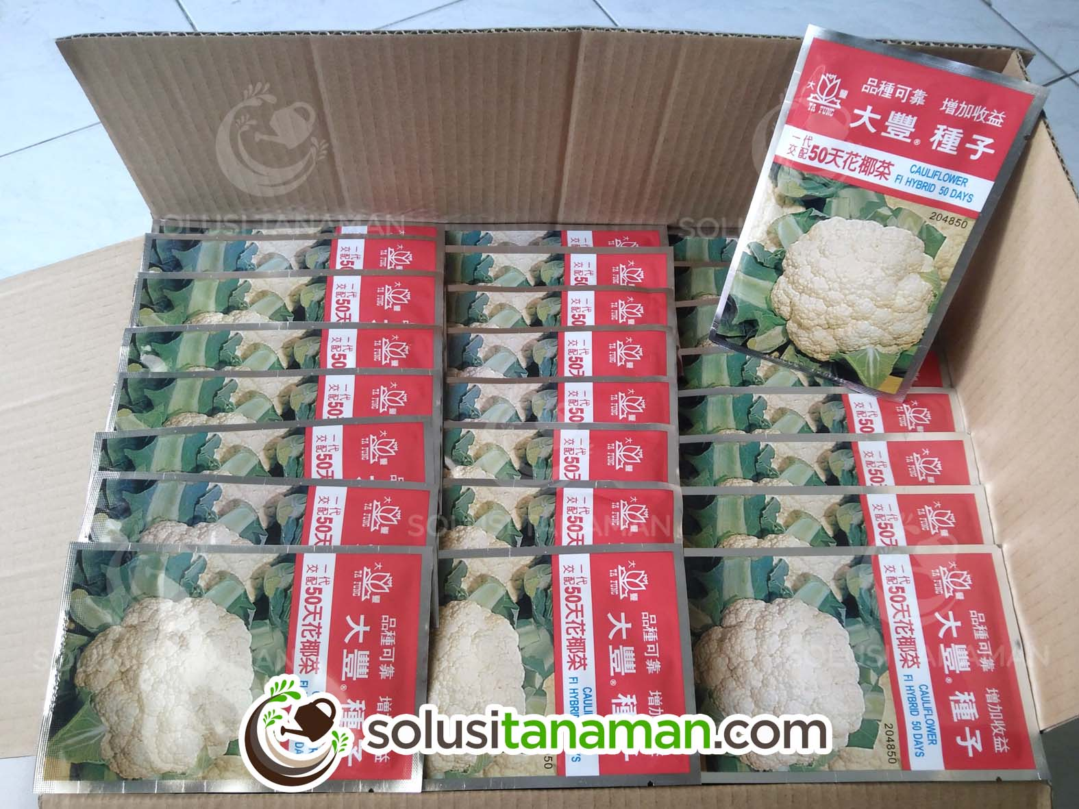Bunga Kembang Kol 50 F110g Bibit Benih Tanaman Sayur Hidroponik 10 Biji Harga Rp 14700000 Pack Gram