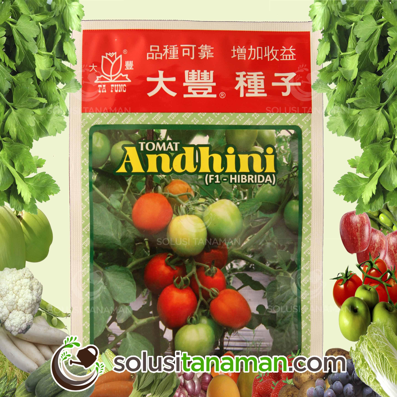 Home solusi tanaman tomat andhini f1 5gr bibit benih tanaman sayur buah hidroponik ccuart Images